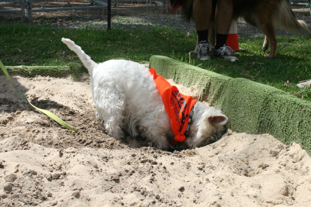How to stop a dog from digging in the same spot